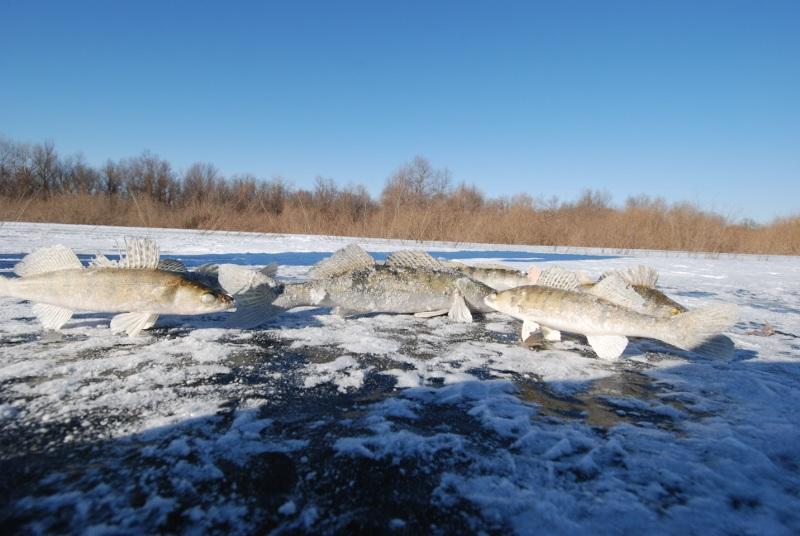 Новости: Особенности ледовой ловли на Нижней Волге, или Серебряный иней в «Золотом квадрате»