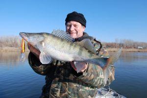 Ахтуба, судак, декабрь 2011 г., вес 4 кг 400 г