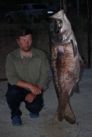 пёстрый толстолобик, июль 2012 г., вес 55 кг